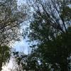 More Birds in Signal Mountain, Tn