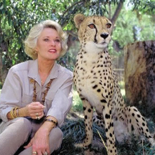 Tippi and the Tigers