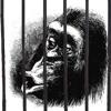 Softly, Softly, Catchee Monkey - The Luni Troupe - 3 Degrees of Bipedia .lyrics in.Download Enabled