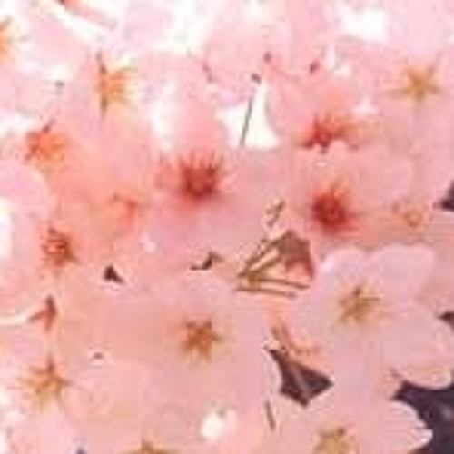 "ZERO-SUN DJMIX(2012-04-01)@FreedomSide ""Ohanami"" party"