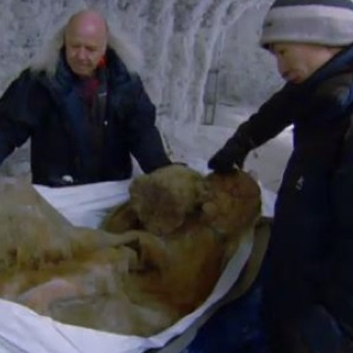 Frozen Baby Woolly Mammoth Discovered in Siberia