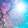 Tanz in den Frühling
