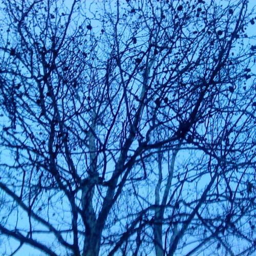 Winter Ghost