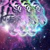 Bright Light Bright Light - Disco Moment (Fear of Tigers Remix)