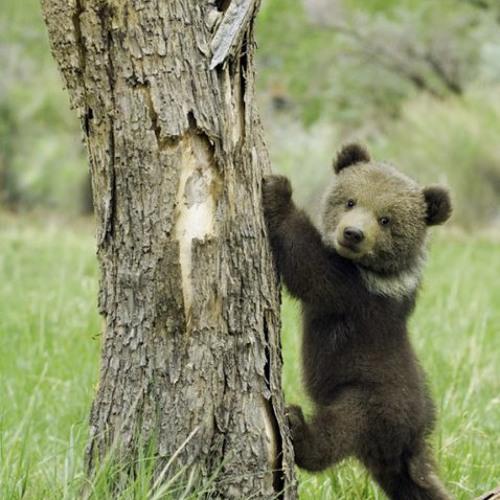 Little Bear Paws