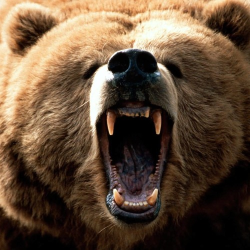 What's the difference between a bear?