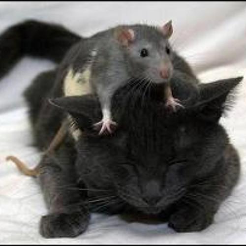 Cat Rats By Skrillex (Fearful Symmetry Remix)