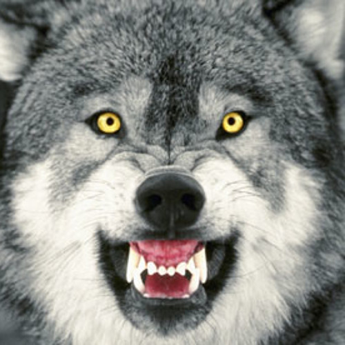 Yello Guurl - Wolf