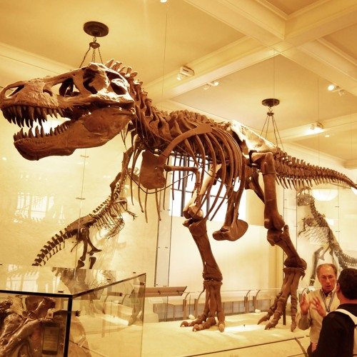Blogsound: American Museum of Natural History, New York City