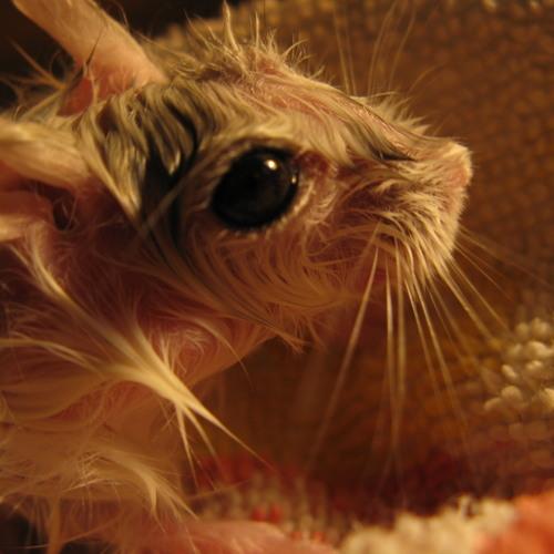 My hamster's heart sample