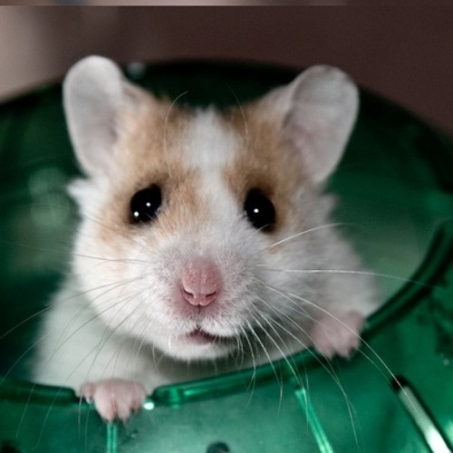 Funky Hamster