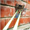 Turbo Lazer Kitten 02: Nora Posch - Hairballllz on Fire!