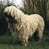 Shaggy dog.mp3