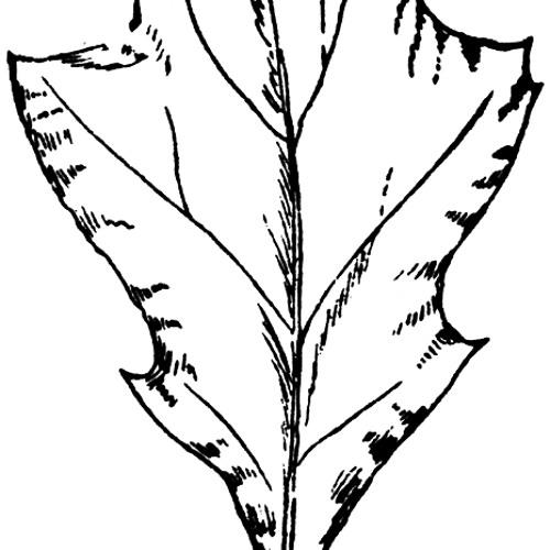 Unlogik-Oak
