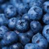 Ace Boon Coon x Darq E Freaker - Fruity (DJ Hipnotikk's Blueberry Refix) (BUY IT NOW TO DL)
