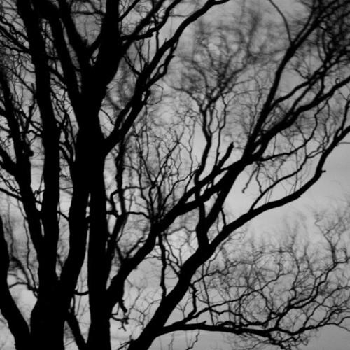 Five Step Path - Dark Lit Dream