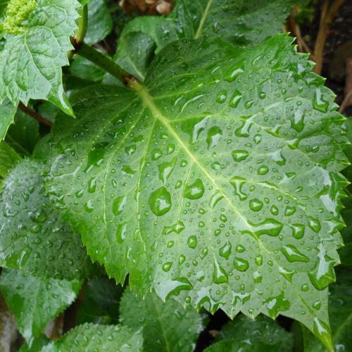 Ambience Rain