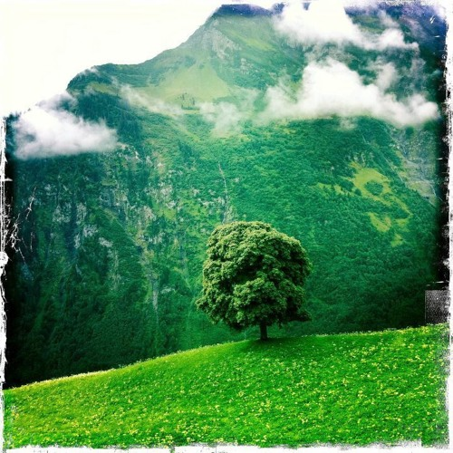 Morning rain (Song for Esmeralda)