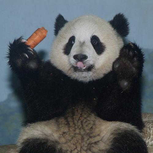 Panda Beatz