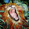 King Of Lions - Sunny Day In Da Jungle