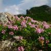 Wild Mountain Thyme - Feat. Hannah Duncan, Martin Lucas, Oorlab