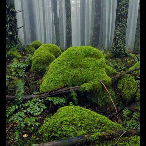 Green Sliding By