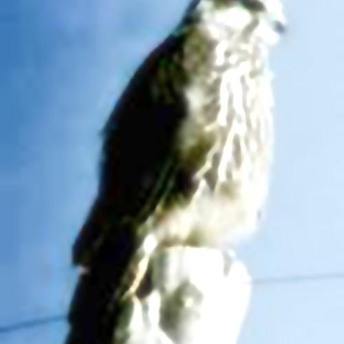 bruderkong - bird of colonn