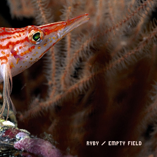 Empty Field - Маленькие рыбы