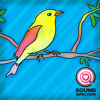 Saddleback-Bird Call Song-Alert Text Tone