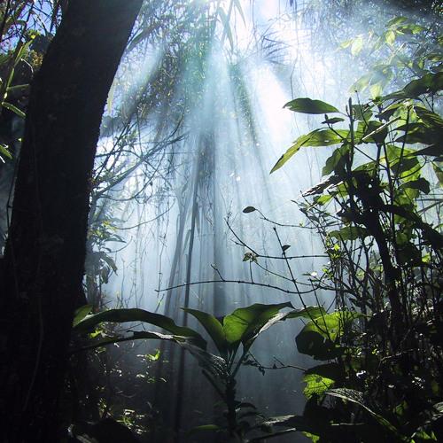 Pdubz - Jungle Thunder