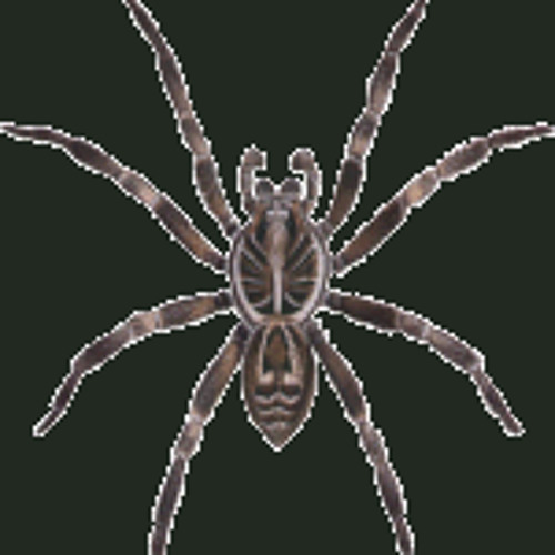 WILL BAILEY - SPIDER ***free download for my people***