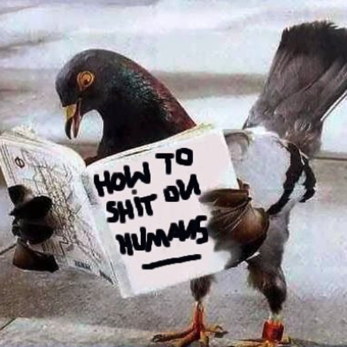 Pigeons [FREE DOWNLOAD]