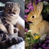 Cute Bunnies and Cute Kitties [disquiet0020-nodebeat]