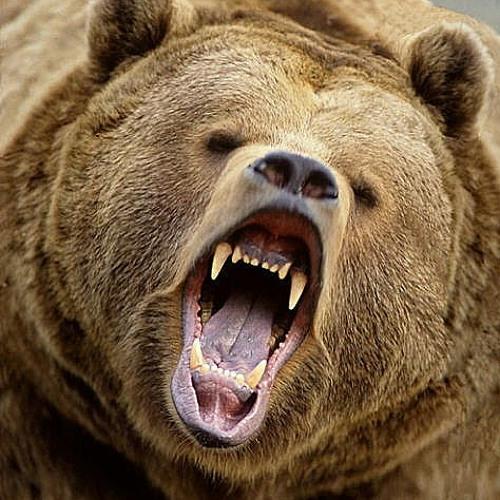 bear tape