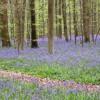 BLUE IN GREEN (miles davis)