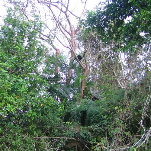 Dubsmith House A Forest Emix
