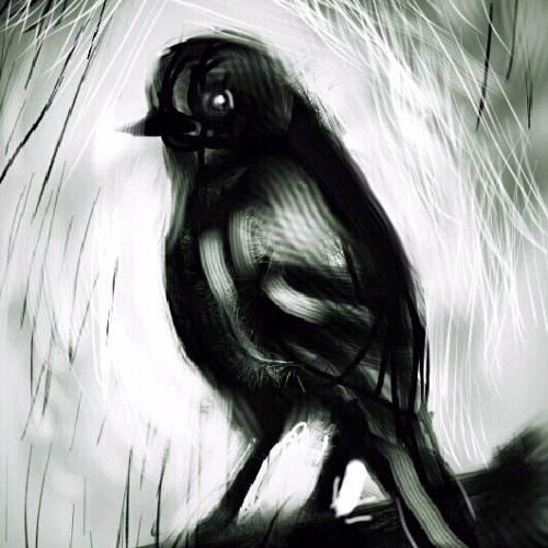 The Lone Bird