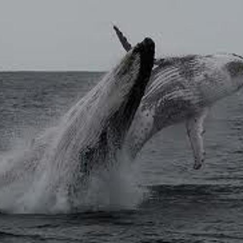 Disco Whales