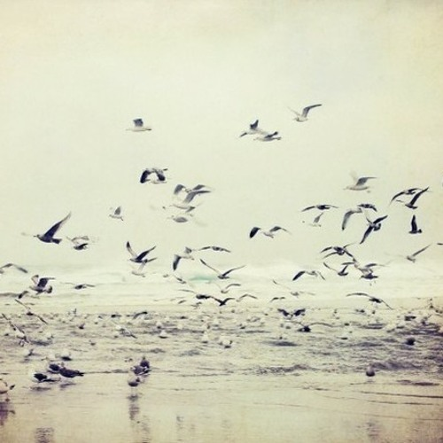 Meerdat - It doesn't matter (stbb273)