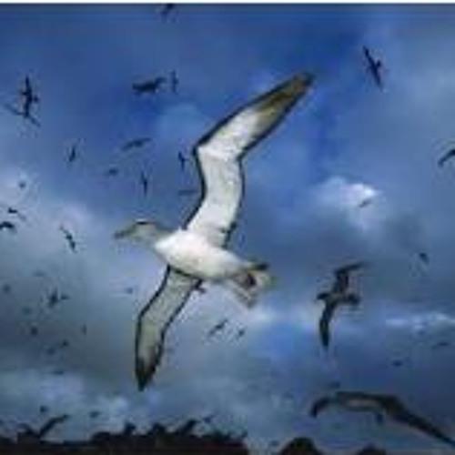 Albatross (speed mix)