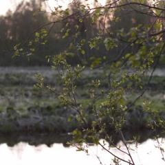 river's edge at dusk, May 14th 10pm