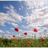 Oliver Schories - My Summer 2012 (Mixtape June 2012)
