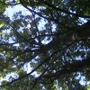 The Dalles Trees