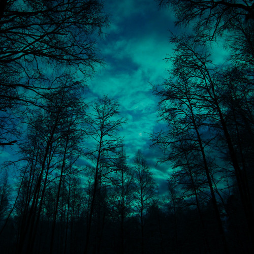 Midnight in the Woods