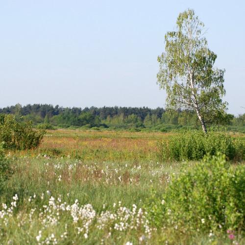 Simply Around Me - 14 - Marsh in the morning (bagno o poranku)