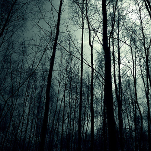 Midnight in the Forest_By Ostenvegr's Travel_