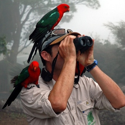 Hoop - Birdwatching (2012) (PREVIEW)