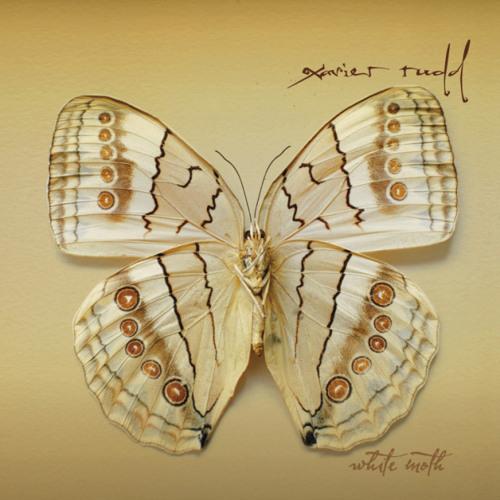 06 White Moth