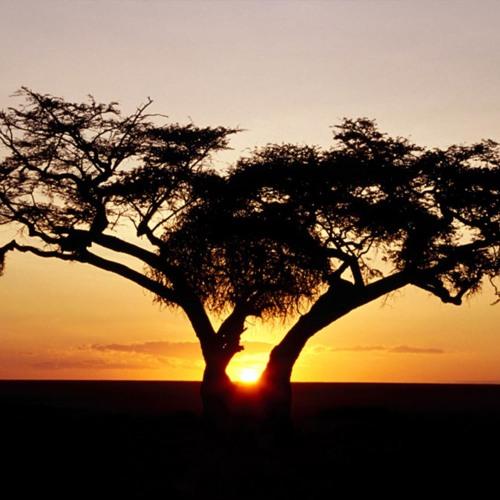Simonus - Africa