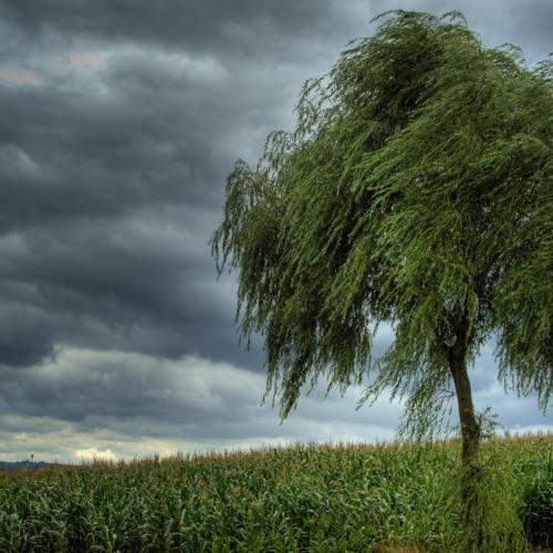 Rux - Shakin Trees